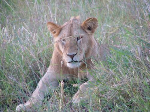 Kenya061